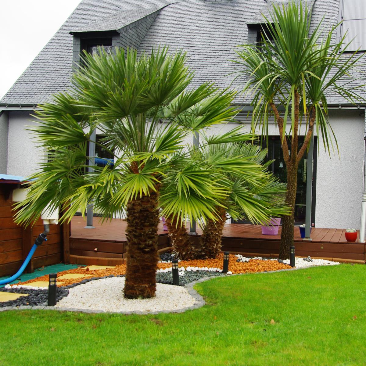 Plantations palmiers